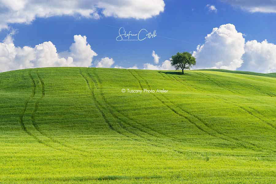 Stefano Coltelli - Tuscany landscapes - Val d'Orcia